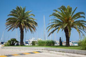 Palmen am Yachthafen von Pescara