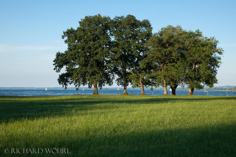 Bäume am Chiemseeufer